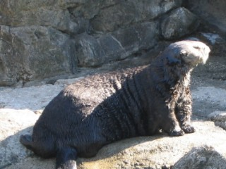 Here is that same Otter basking in the sun.