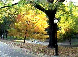 Pic of trees during autumn within Central Park