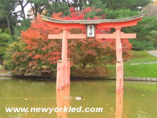 Photo here features the Torii standing amdist the pond within the Brooklyn Botanic Garden.