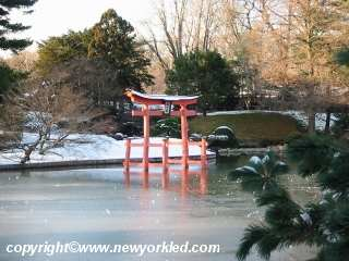 The torii and pool amidst the snow.