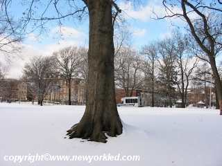A tree and snow in the Bronx.