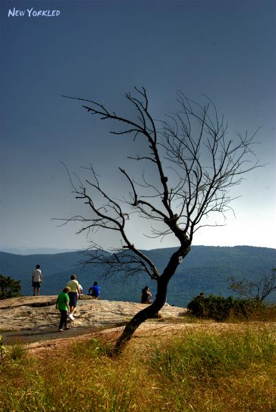 Wonderful tree captured atop Bear Mountain on this late Summer's Day in 2007.
