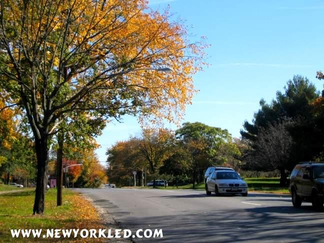 Facing East along Pelham Parkway we catch sight of passing cars and other colorful trees.