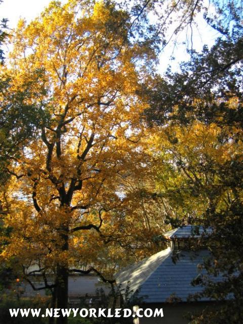 Gorgeous golden colors can be seen in this photo.