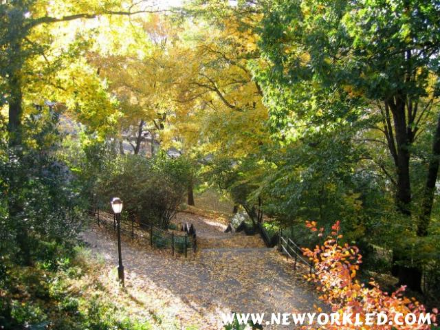 With NYC Autumn 2004 at its peak one was able to spot so many beautiful trees within Manhattan Island!