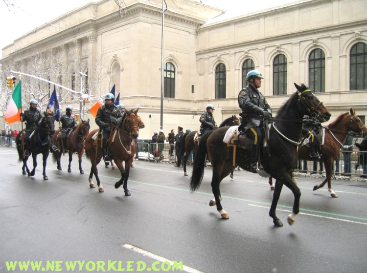Another photo of the galloping horses which carried Police Officers along 5th Avenue.